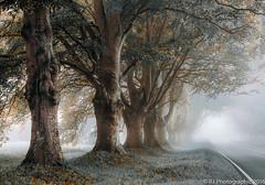Mist-1 (Explored) (RJ Photographic) Tags: trees mist wet leaves kingston dorset lacey beech