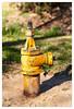 Hydrant (mhocter) Tags: california park yellow hydrant canon eos firehydrant canoneos ef losangelescounty granadahills canonef ef247028l canonef247028l canoneos5dmarkii omelvenypark 5dmarkii 5d2 canon5dmarkii