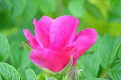Nature : Flowers