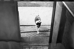 #49* (7things_and_photo) Tags: leica film cat m6 fomapan200 monochrone