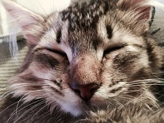 The face of an angel (Kenster79) Tags: cute cat kitten pussy meow pussycat