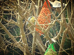 DSC02023 (1) (Enrico Luigi Delponte) Tags: birds sony vogels uccelli sonyfuncamera