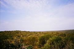 Royal National Park (timothybrennan) Tags: summer film 35mm bush sydney olympus 35mmfilm nsw royalnationalpark olympusxa3