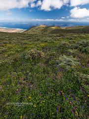 (Mustafa Demirrs) Tags: mountain nature grass landscape photography spain nikon fotograf outdoor hill natur lanzarote palm espana spanien doga d800 fotografi landskap manzara ispanya