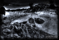 Nightmare (Bruno_Caimi) Tags: dark mono spider bad pretoebranco ossos aranha aracnideo photomatix pesadelonightmare