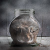 Bunny In A Bottle (Jeric Santiago) Tags: pet rabbit bunny texture animal bottle conejo lapin hase kaninchen うさぎ 兎 compositephotography conceptualphotography fineartsphotography winterrabbit