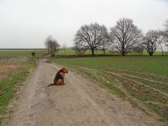 2016-0087 (schuttermajoor) Tags: nederland hond che eijsden 2016 airedaleterrier ommetjenederland