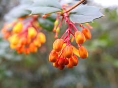 Nature (uk_dreamer) Tags: flowers flower tree green nature bokeh