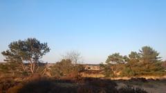 Rozendaalseheide (Nelis Zevensloot) Tags: heath veluwezoom heide zandverstuiving rosendael velp rozendaal bruyre sanddrift rozendaalseveld sandverwehung