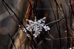 IMG_9239 (nitinpatel2) Tags: macro snowflakes patel nitin