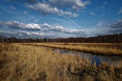 Moor in Esterwegen - 2016-005_Web (berni.radke) Tags: moor bog emsland sumpf morast esterwegen heidemoor