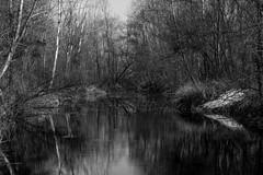 Lanca (discodavyjones) Tags: blackandwhite reflections monocromo ticino fiume cameri parcodelticino lanca