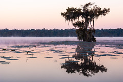 Lake Martin Dawn (fate atc) Tags: trees usa lake sunrise dawn louisiana atchafalayabasin delta swamp wetlands cypress lakemartin