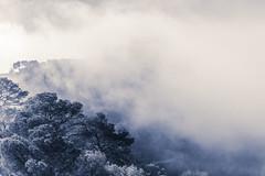 Road into the clouds (Martin Zurek) Tags: road trees cloud mountain cold tree clouds wind hill salvador mallorca sant spanien majorca balearen illesbalears islasbaleares balearischeinseln canon5dsr 5dsr