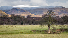 Ochil Hills (gavmroberts1984) Tags: snow tree scotland unitedkingdom stirling gb feild cambus ochilhills alloa