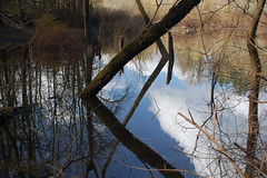 Reflections, flooded pond in Rood Bridge Park, Hillsboro, Oregon, USA (nikname) Tags: trees water reflections urbanparks