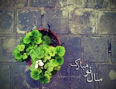 1 3 9 5 (Ebrahim Baraz) Tags: spring nourooz   1395  baraz  ebrahimbaraz