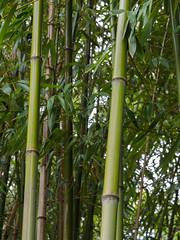 _C122593-web-10.jpg (laurenz.lanik) Tags: vienna bamboo botanicgarden bambus botanischergarten