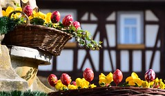Where Easter-eggs grow ... (:Linda:) Tags: germany thuringia town themar easter easteregg ivy halftimbered window basket stiefmütterchen yellowflower pansy handbemalt handpainted egg osterei