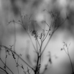 Prairie Field Details 006 (noahbw) Tags: winter light blackandwhite bw abstract blur water monochrome forest square landscape blackwhite woods nikon dof natural branches depthoffield dreamy prairie dreamlike desplainesriver d5000 noahbw ryersonwoodsforestpreserve