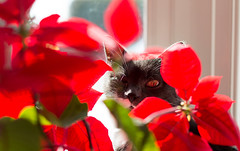 Lady of the flowers (Julian Dyer) Tags: cats misty cat grayandwhitecat canon5dmkiii
