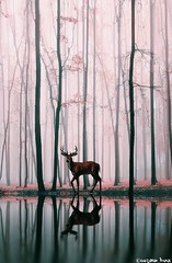 Spirit of the forest II.  (gusdiaz) Tags: naturaleza lake reflection tree art primavera nature beautiful rio digital forest photoshop river lago photo spring arboles relaxing manipulation deer bosque reflejo ciervo venado relajante