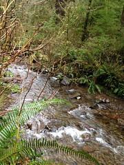 Necarney Creek (malchats) Tags: oregon oswaldweststatepark necarneycreek