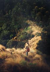 Trekking (Tom Abraham Dcruz) Tags: travel people nature grass trekking photography candid munnar kolukkumala tomabrahamphotography