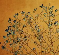A sense of Asia (Edita Ruzgas. Thanks for your visit.) Tags: yellow bush asia background blossoms magnolia feeling blooming sense edita ruzgas