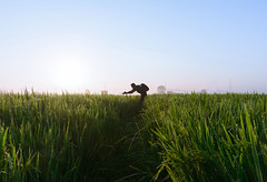 Exploring on Fields. (Ramkumar Radhakrishnan) Tags: camera sunlight green droplets explorer dew fields rays chennai radhakrishnan roi cwc ramkumar sunlightrays sunligt manimangalam happyphotography rootsofindia greenpaddyfields chennaiweekendclickers linetrack cwc515 aravindganesan