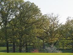 IMG_4345 (mohandep) Tags: flowers trees plants nature scenery walk wildlife families birding stlouis forestpark