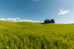 Val d'Orcia (Vassili Balocco) Tags: italy verde green primavera field spring italia outdoor wheat country campagna tuscany campo toscana valdorcia grano sanquiricodorcia