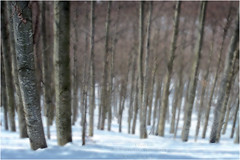 San Valentino - Faggi nella neve (Armando Domenico Ferrari) Tags: italien trees italy snow alberi photoshop lumix italia tag panasonic neve montagna brescia adf montebaldo faggi muontain istrice1 armandodomenicoferrari rifgraziani armandodomenicoferrariphotographer armandoferrarifotografo armandodomenicoferrarifotografo lumixpanasonictz20 svalentinorifgraziani sanvalentinodibrentonico