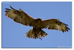 Oasi-S.Alessio-25-04-2016_008 (fdpdesign) Tags: italy macro nature nikon natura animali d800 pavia oasi 2016 salessio nikon105micro