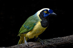 Bronx Zoo Bird1 (bobrizz1) Tags: bronxzoo 1001nights 1001nightsmagiccity