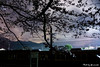 (yomoneko1) Tags: zeiss sony blossoms plumblossoms α77ⅱ