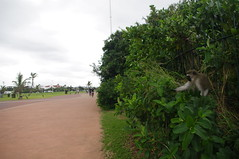 Monkey, Durban, South Africa (ARNAUD_Z_VOYAGE) Tags: africa street city urban building art beach nature architecture landscape state action south country capital areas region department metropolitan durban kwazulunatal municipality
