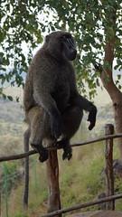 Ethiopia1611 (kaiserinlee) Tags: arba minch