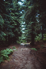 Follow the trail (Erik [Got No Time To Grow Old]) Tags: wood shadow green forest canon path availablelight tschechien trail 1750 cz grn tamron wald schatten f28 pfad 2015 jeschken 550d jetd
