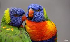 Parle -moi d'Amour !!! (Elyane11) Tags: portrait sony humour printemps loris coth5 parcdesoiseauxvillarslesdombes slta57