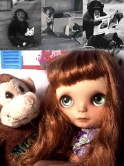 Blythe-a-Day April## 24: No animal testing: Donna Thinks about Project Nim...