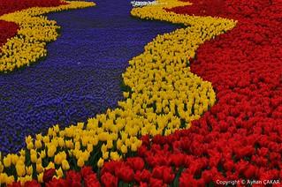 Tulip River Springtime Istanbul