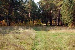 DSC_6028 (Rustam Bikbov) Tags: autumn september 2012    sverdlovskoblast