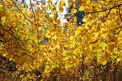DSC_6024 (Rustam Bikbov) Tags: autumn september 2012    sverdlovskoblast