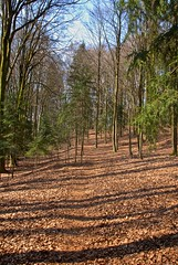 Hiking - Frstenstein (haegar52002) Tags: rot