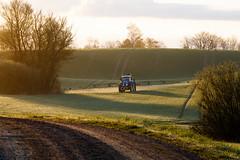 3U4A0290_MartenSvensson (Bad-Duck) Tags: traktor vr morgon amazone motljus newholland maskiner spr jordbruk spruta rstid hstvete omstndigheter