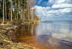 Sunny lakeside view (Joni Mansikka) Tags: trees light sky sunlight lake nature water clouds suomi finland landscape spring woods outdoor horizon blues lakeside shore lakescape pyhjrvi