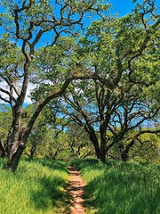 A trail at Sonoma Valley Regional Park (harminder dhesi photography) Tags: california park trees sky green nature clouds landscape outdoors spring view hiking sonoma trail bayarea sonomacounty norcal winecountry glenellen k3 vsco iphoneography snapseed vscocam