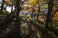 """Moving on"" (Fabio Rage) Tags: park autumn patagonia fall argentina roy los torre cerro national outono fitz glaciares"
