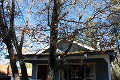 For Sale (rabiem22) Tags: california trees fall home bigbear